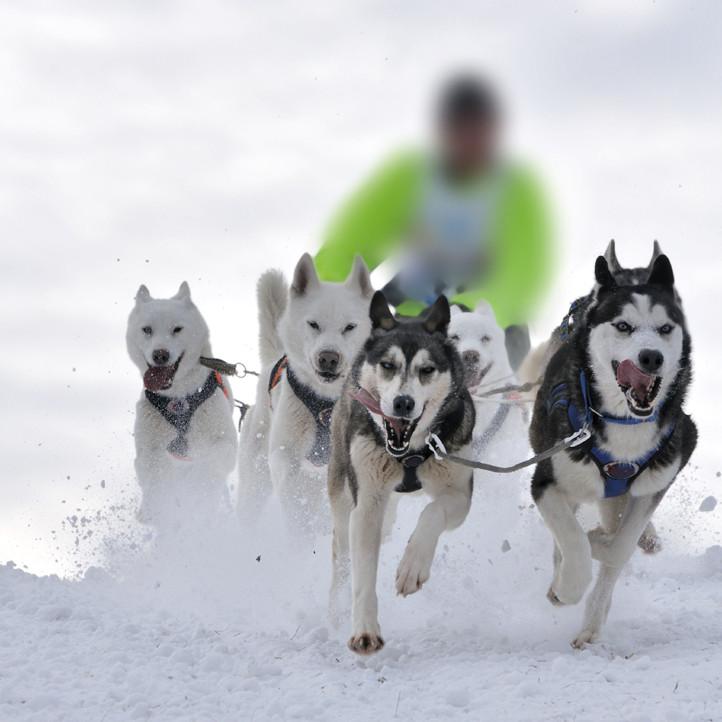 vacances pyrennes piau engaly chiens de traineaux