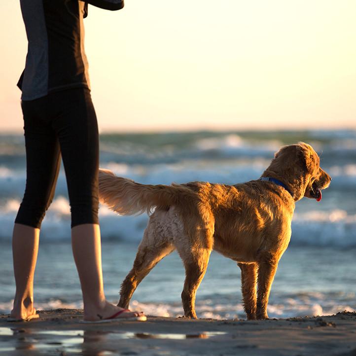 village vacances vendee longeville sur mer chien